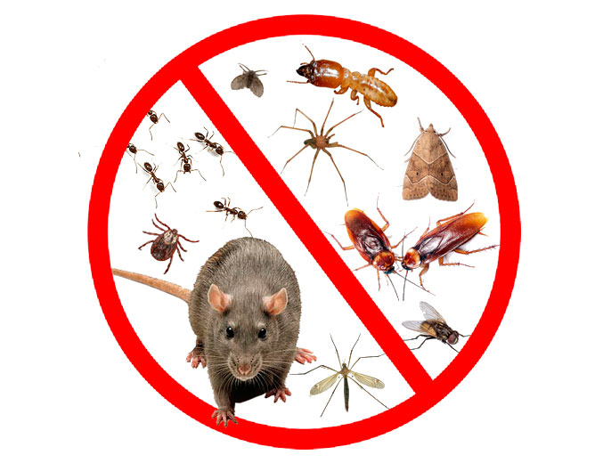 Control de plagas desinsectaci n desratizaci n for Control de plagas badajoz